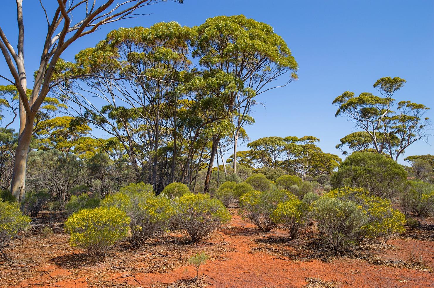 01_kalgoorlie_landscape_bushland