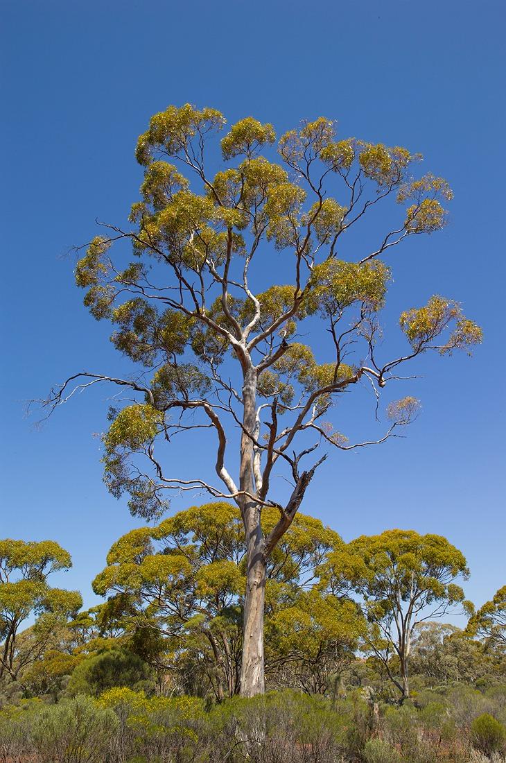 07_kalgoorlie_landscape_bushland