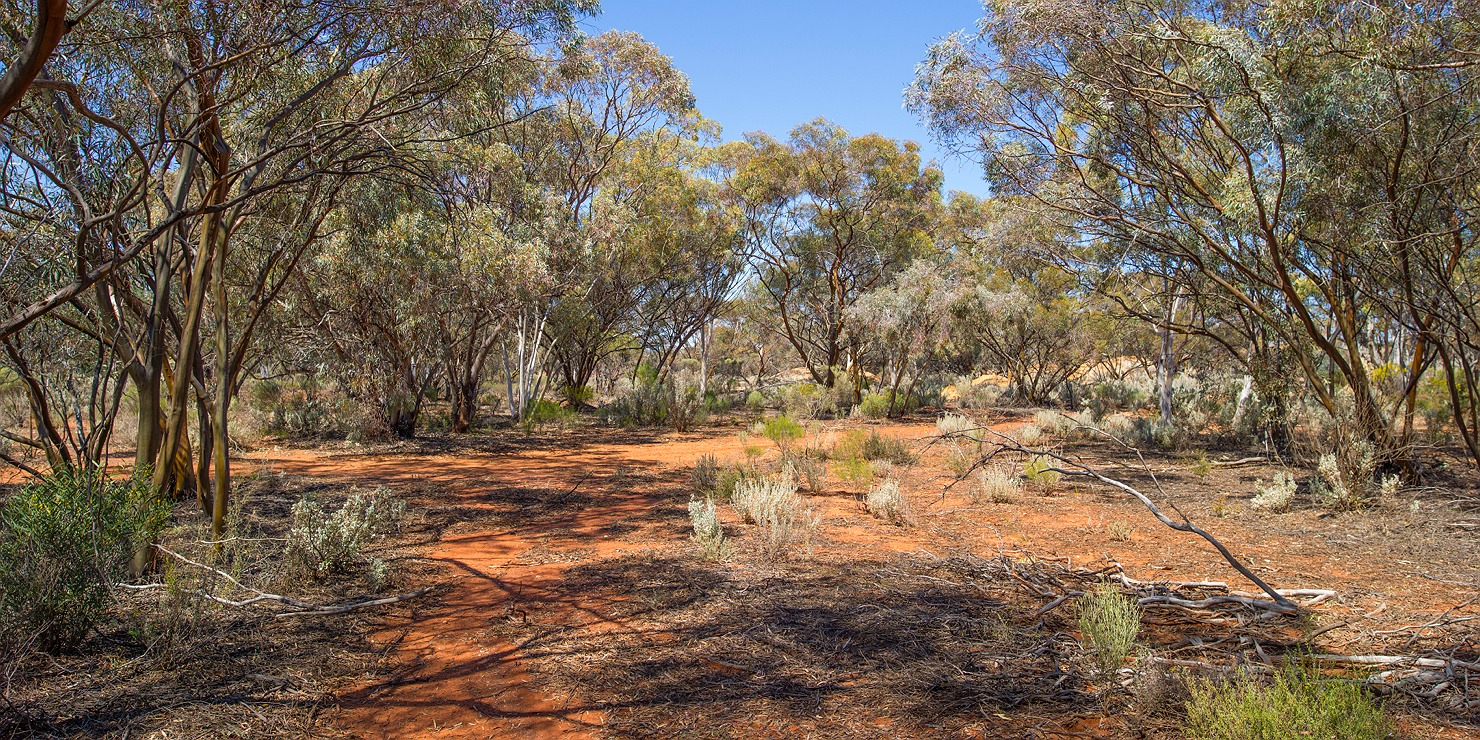 13_kalgoorlie_landscape_bushland