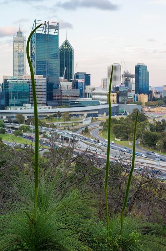 Perth_2014_016