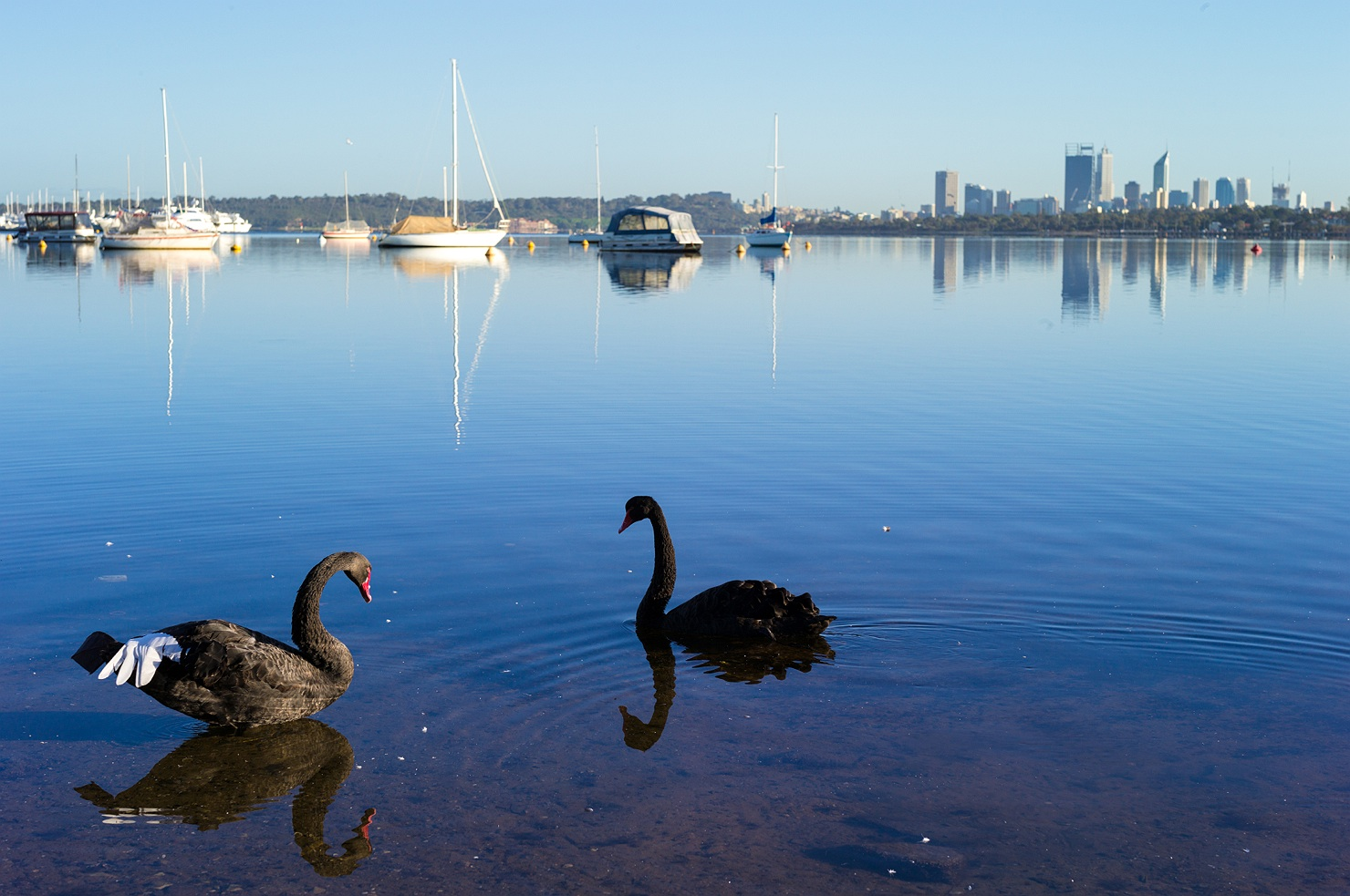 swan river men It's called 'the swan river'  hopefully, its upkeep is maintained and that wealthy business men on their toy yachts don't go polluting something so precious.