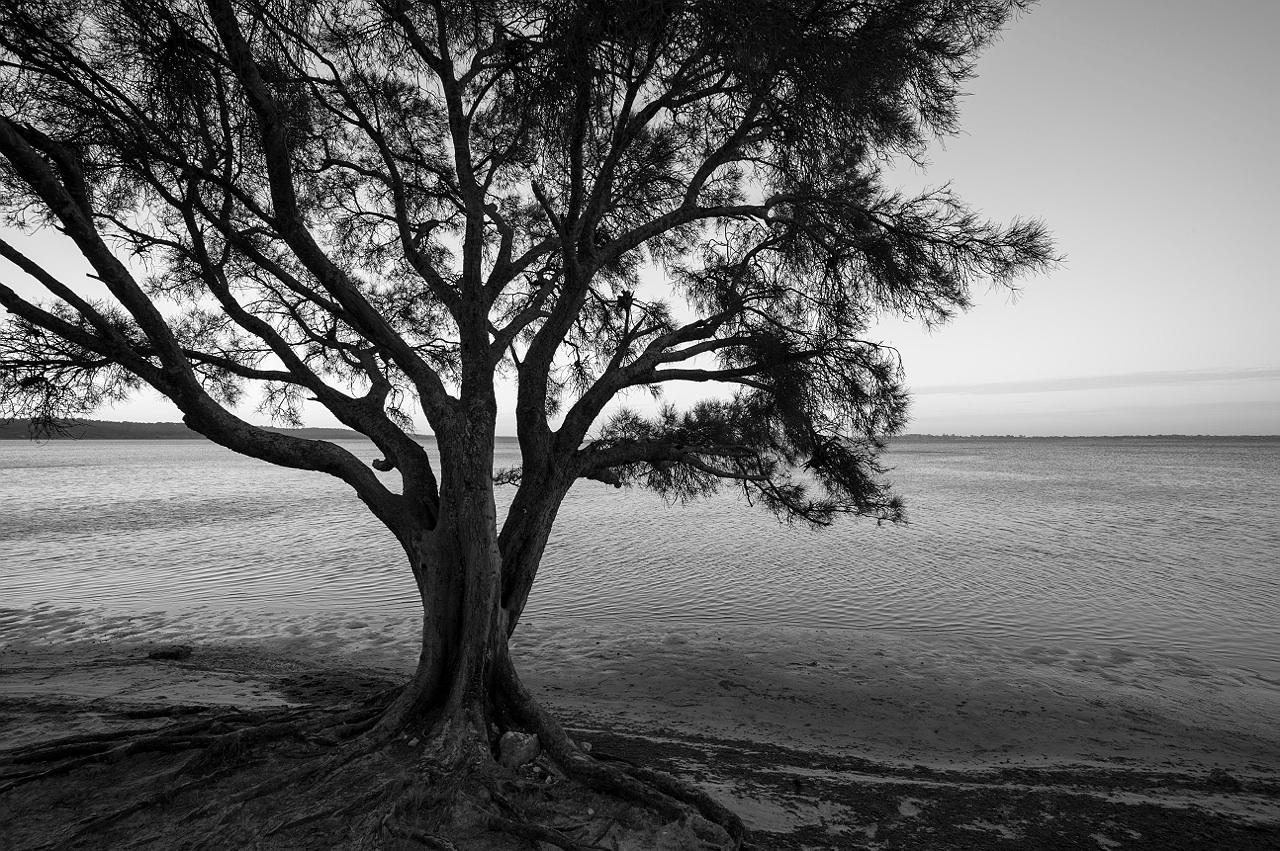 Mandurah_estuary_monochrome_landscape_photography_16