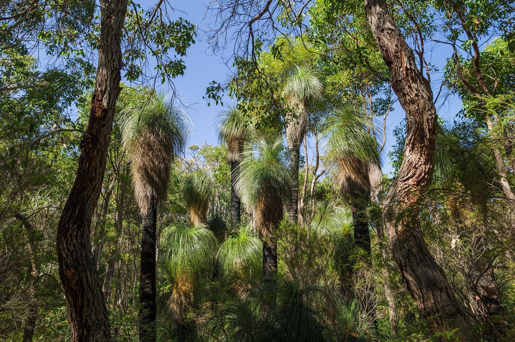 molloy_island_balga_grass_trees