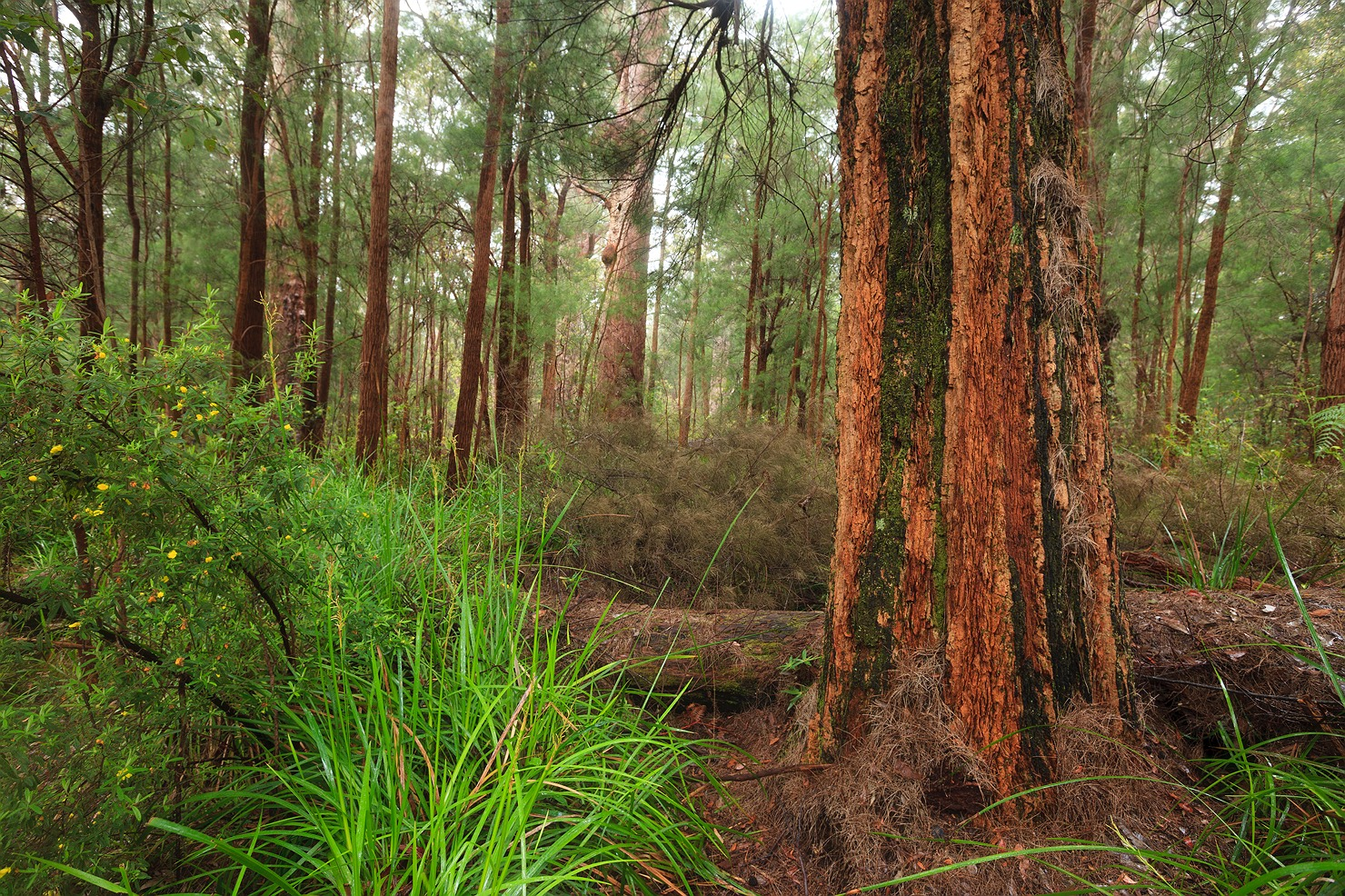 Forests of Pemberton and Walpole