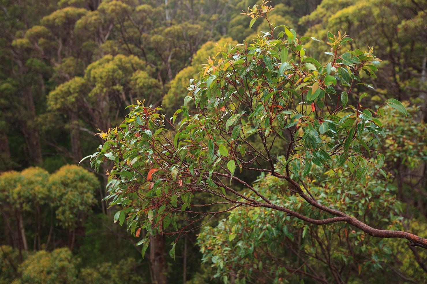 04_pemberton_walpole_forest