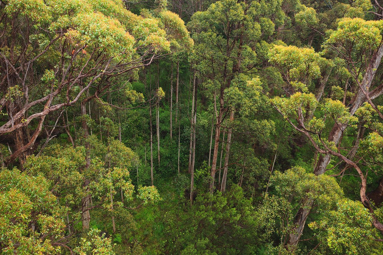 06_pemberton_walpole_forest