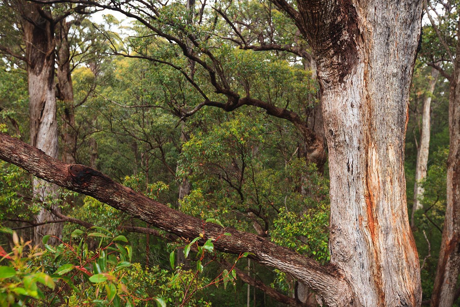 08_pemberton_walpole_forest