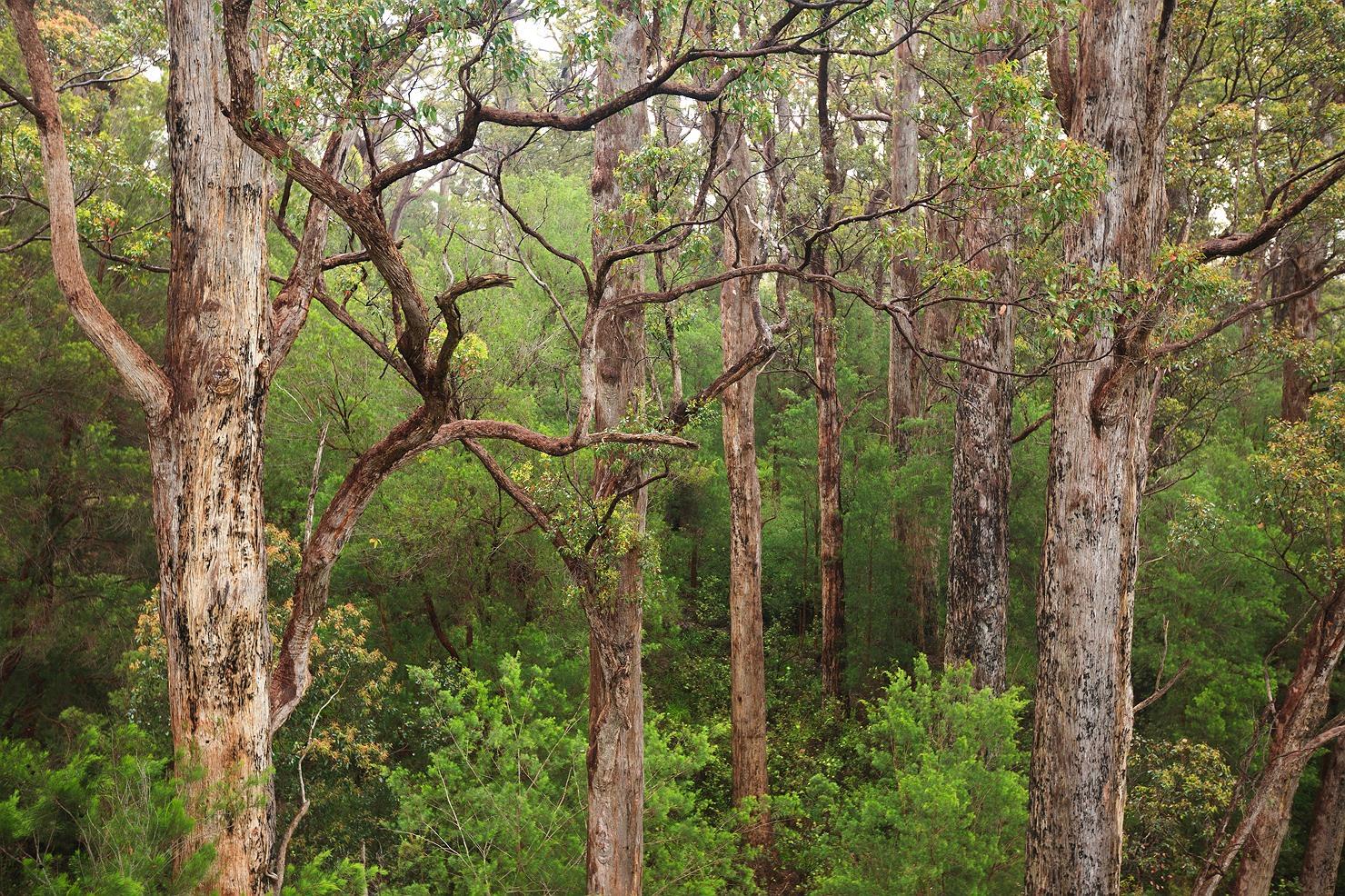 10_pemberton_walpole_forest