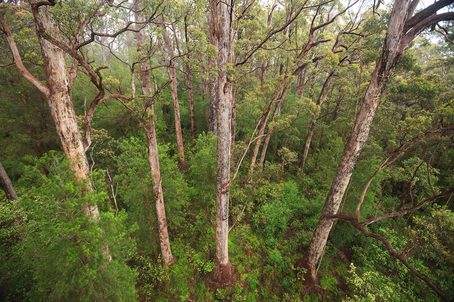 11_pemberton_walpole_forest