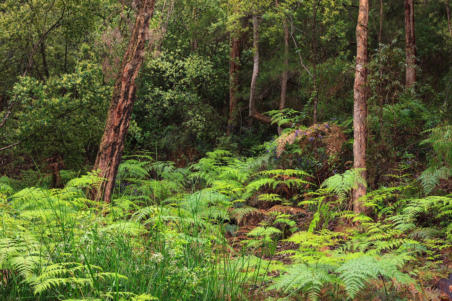 15_pemberton_walpole_forest