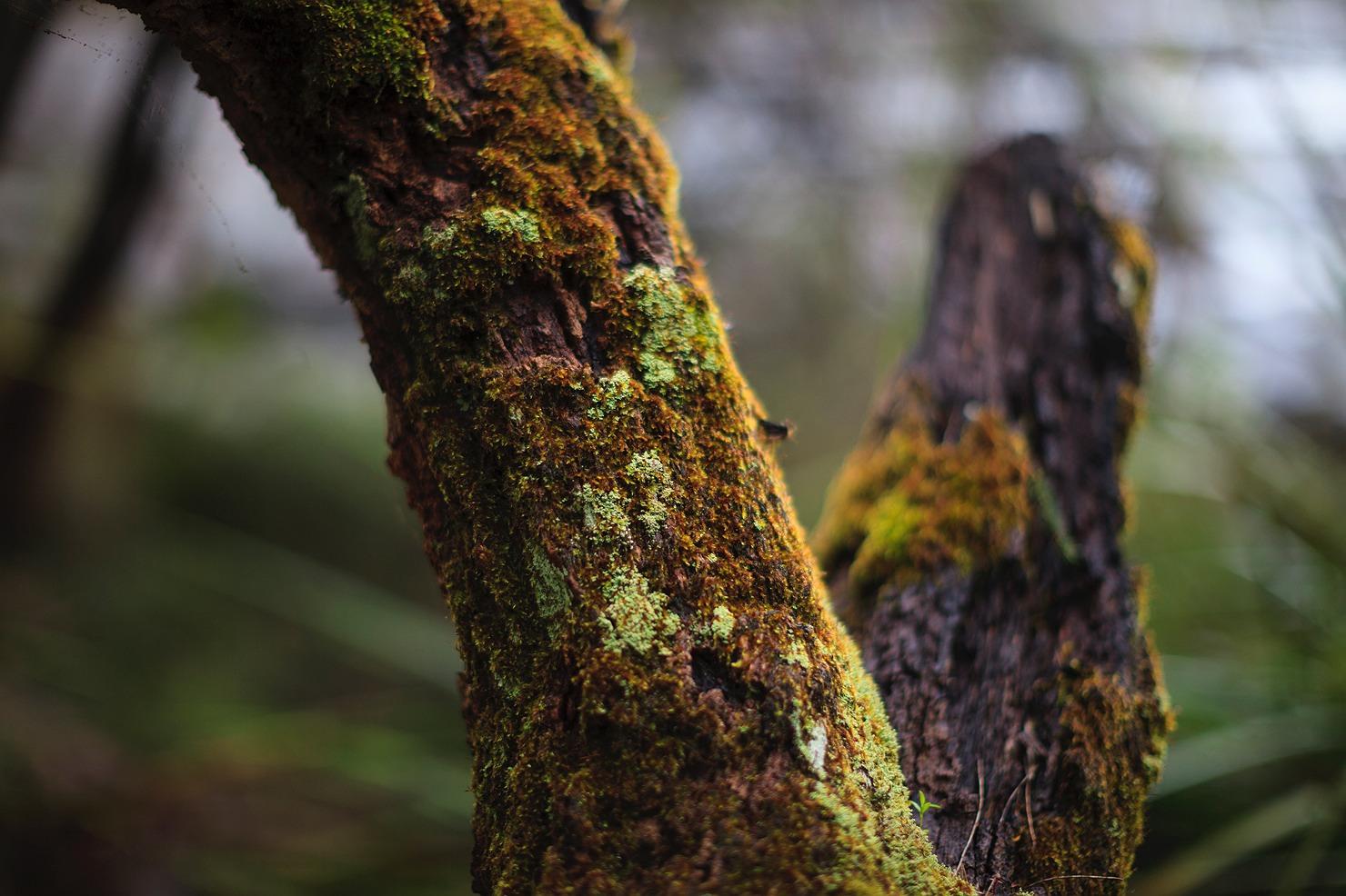 19_pemberton_walpole_forest