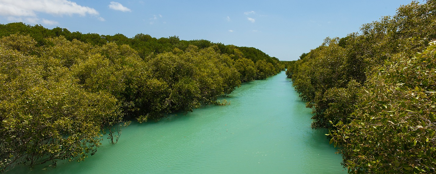 broome_mangroves