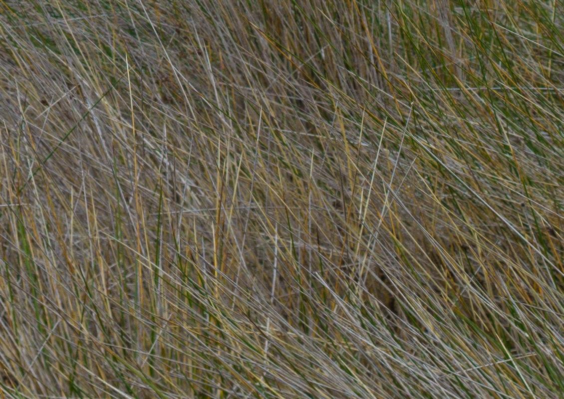 grass-crop-3