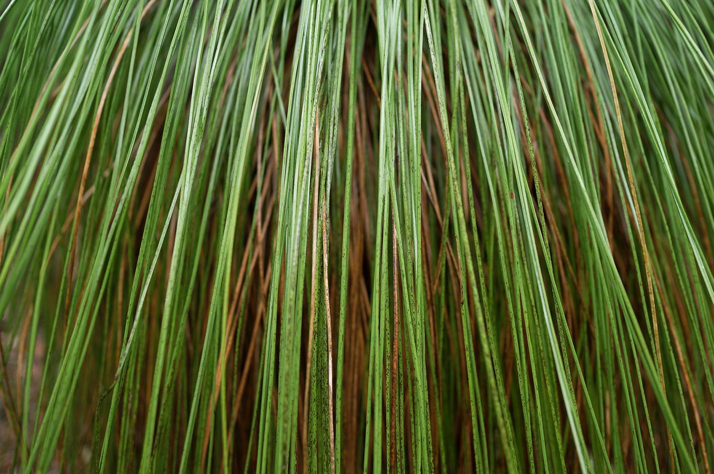 lake_navarino_grass_trees_07