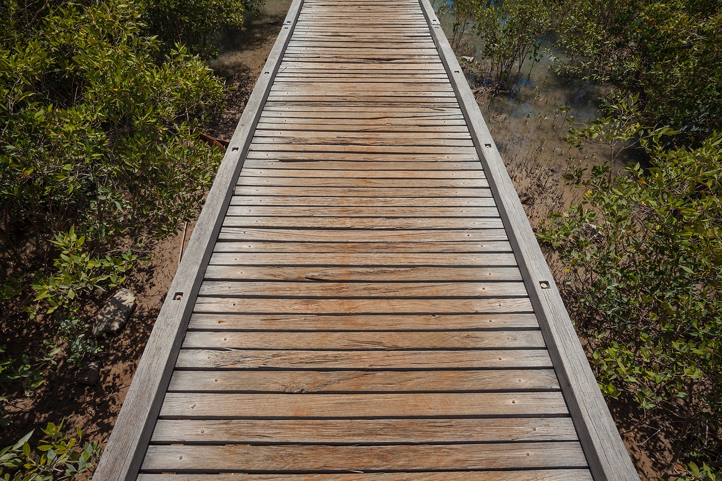 mangrove_boardwalk