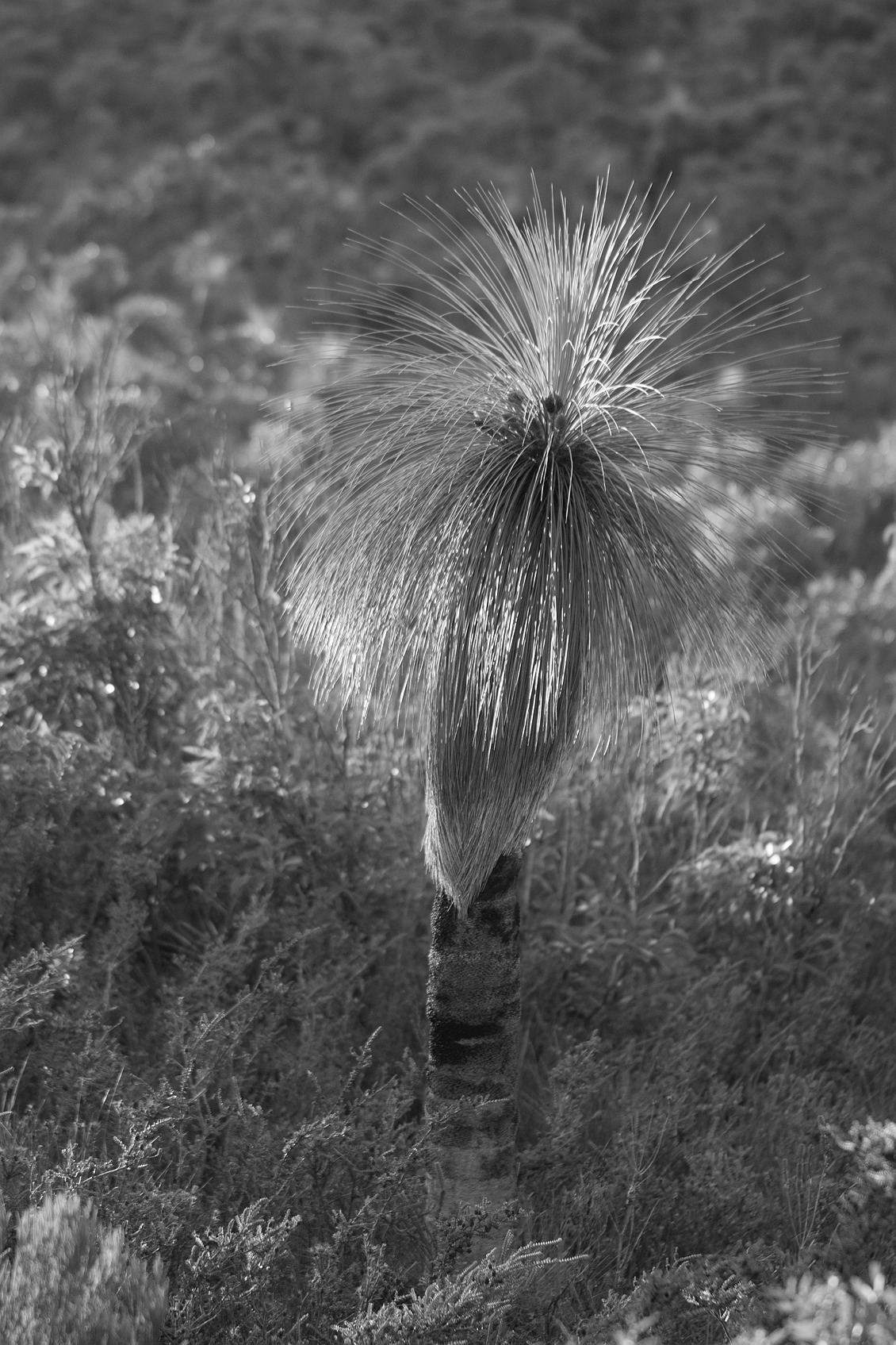 0905_stirling_ranges_national_park_monochrome