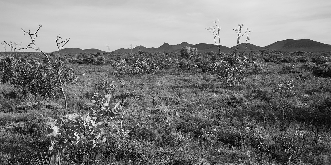 1709_stirling_ranges_national_park_monochrome