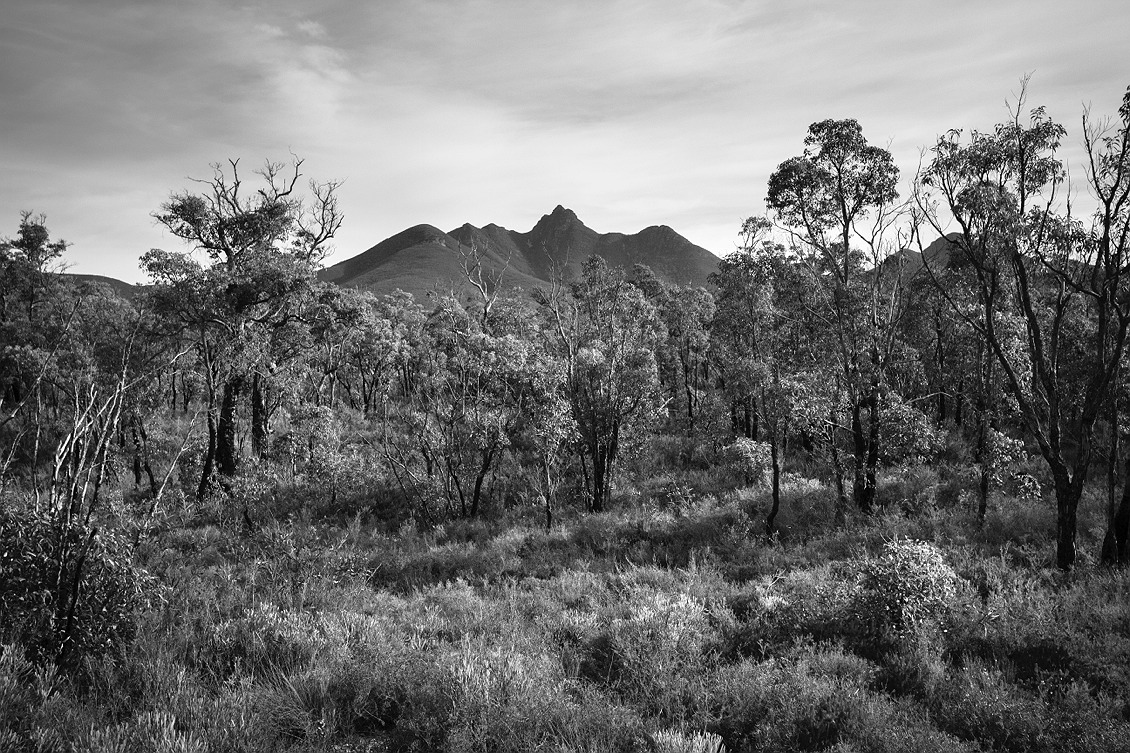 1910_stirling_ranges_national_park_monochrome_toolbrunup_peak