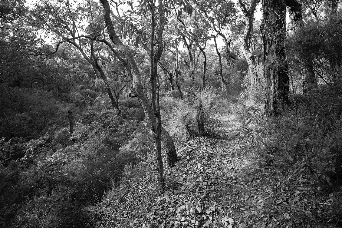 2312_stirling_ranges_national_park_monochrome_toolbrunup_peak