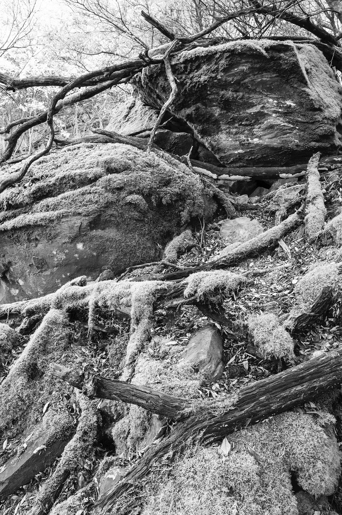 3719_stirling_ranges_national_park_monochrome_toolbrunup_peak