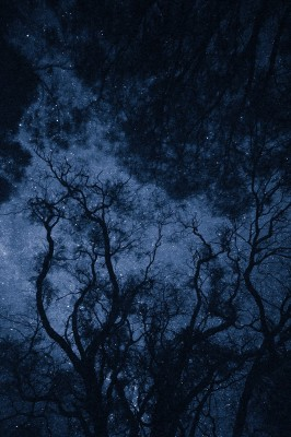 dark_night_sky_stars_through_trees