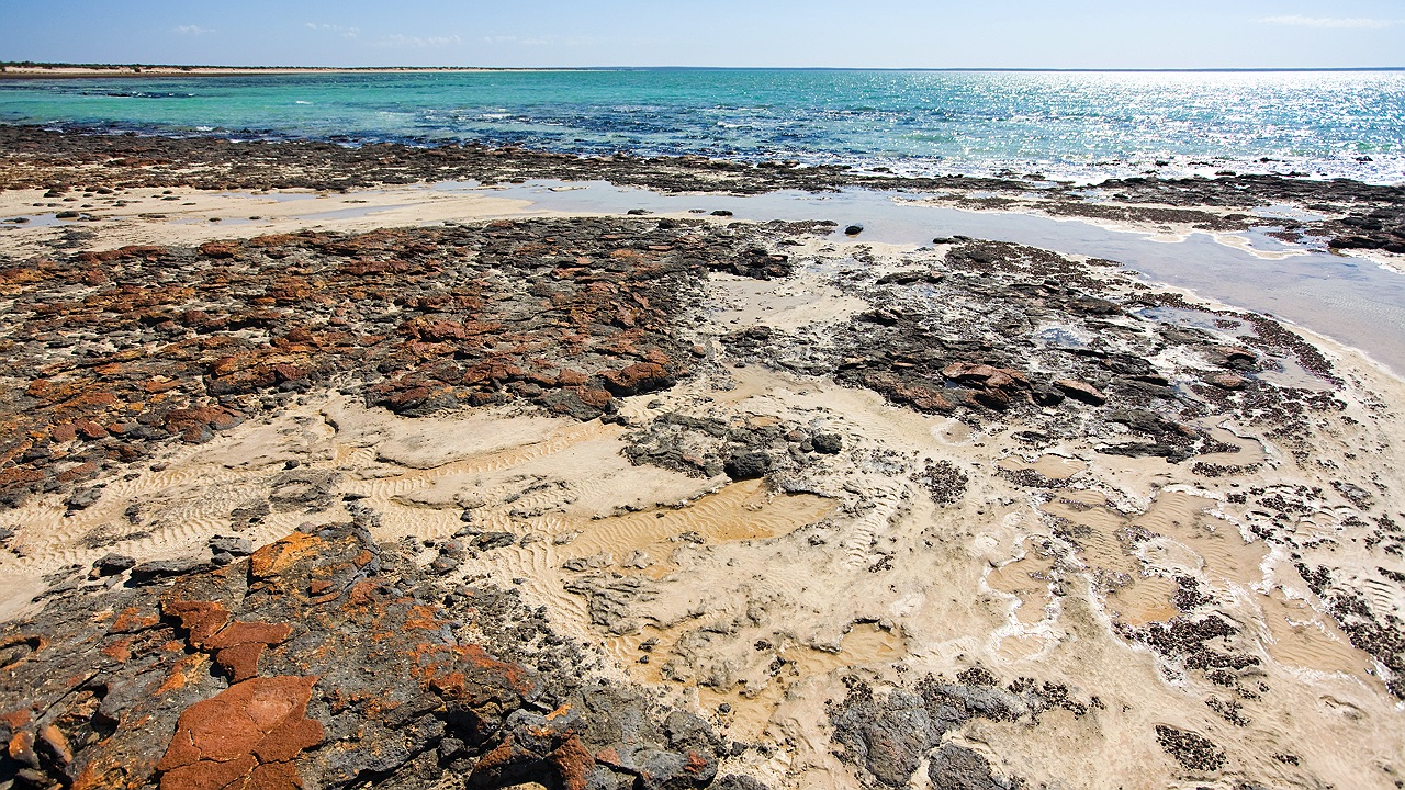 shark_bay_stromatolites_4