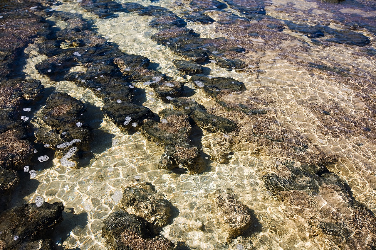 shark_bay_stromatolites_5