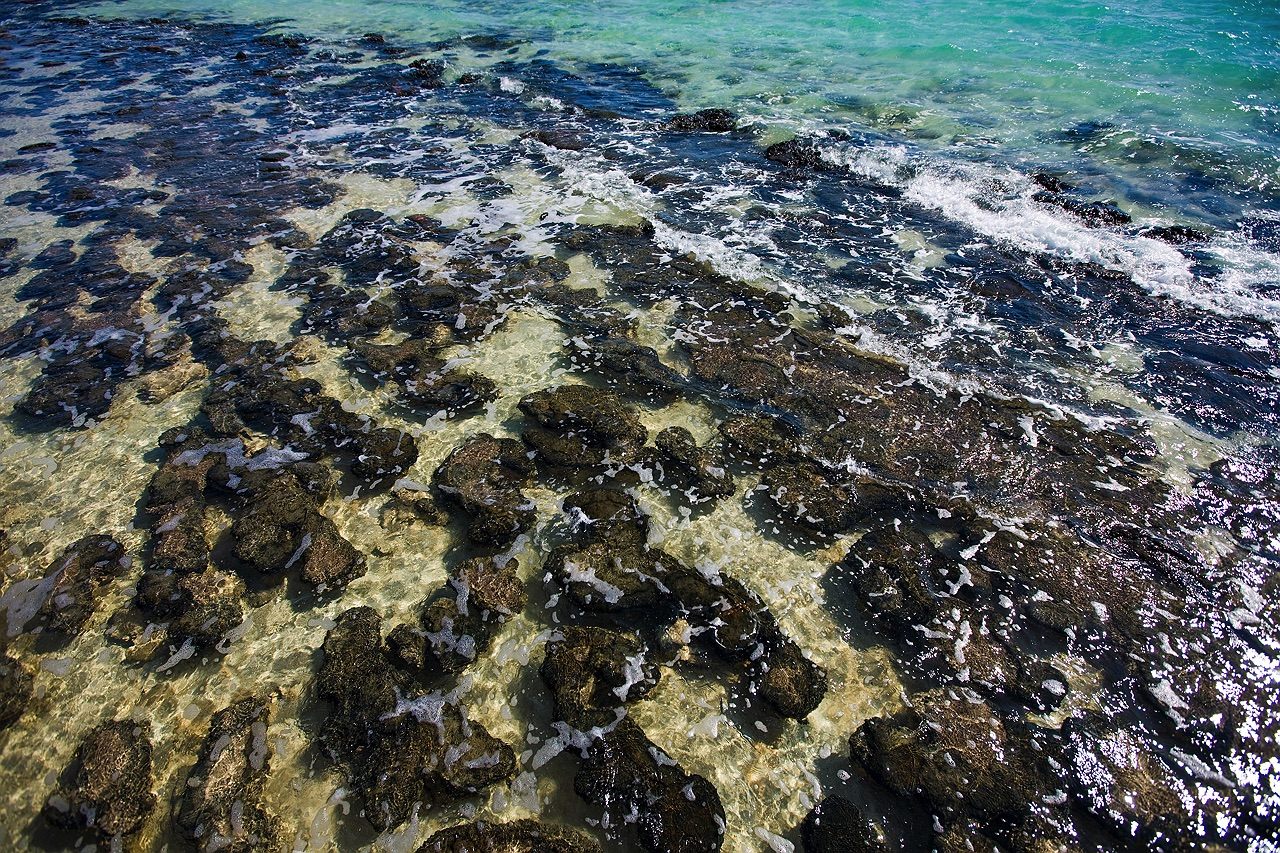 shark_bay_stromatolites_6