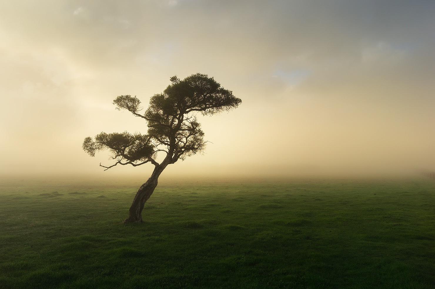 Tree in a quiet field