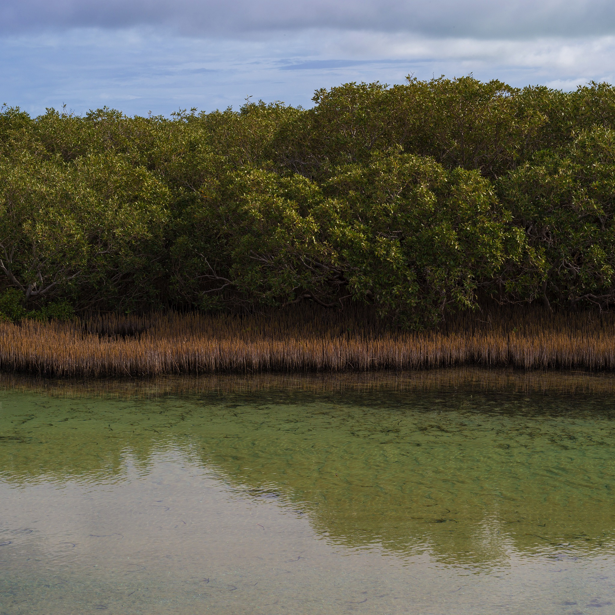 mangroves-little-lagoon-shark-bay-2