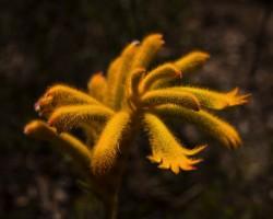 Chittering_valley_wild_flowers_00