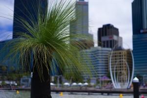 balga-grasstree-elizabeth-quay