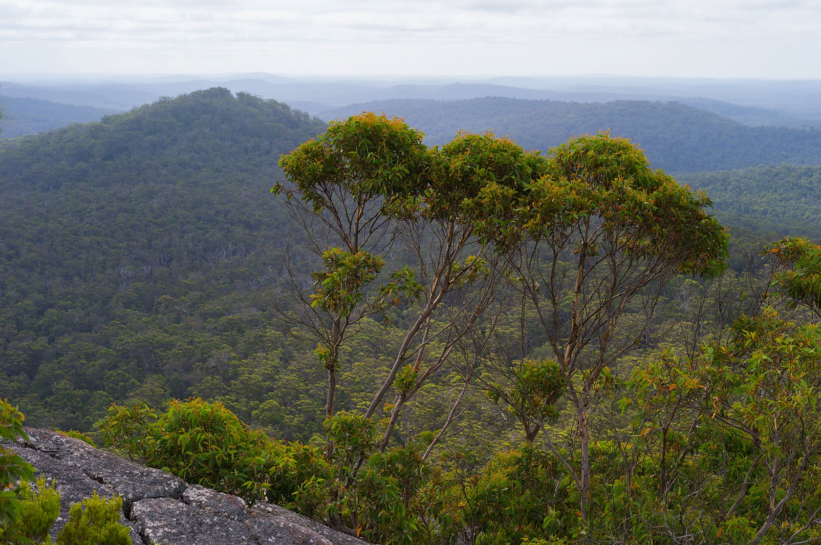 6_Mount_frankland_national_park