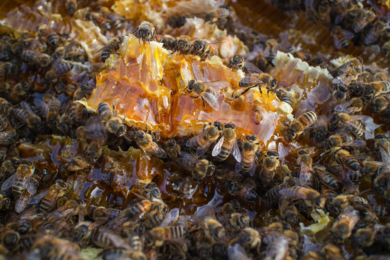 3_bee-hive-in-possum-box