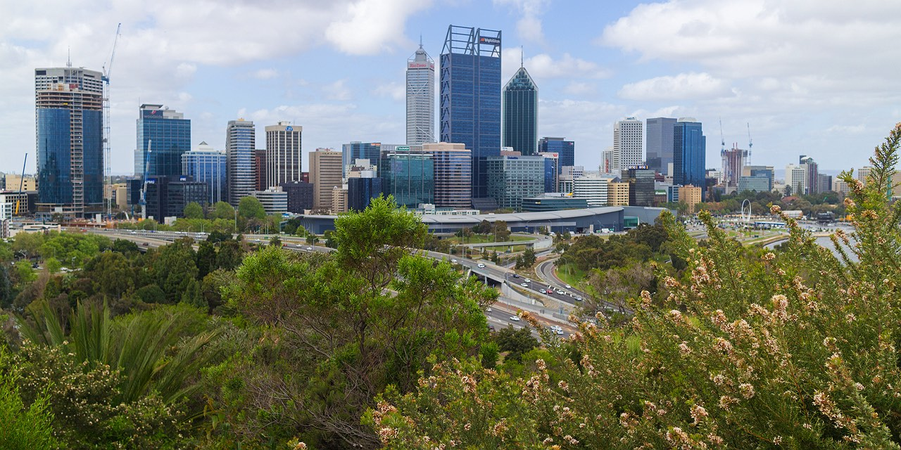 flowers-overlooking-perth-city-from-kings-park