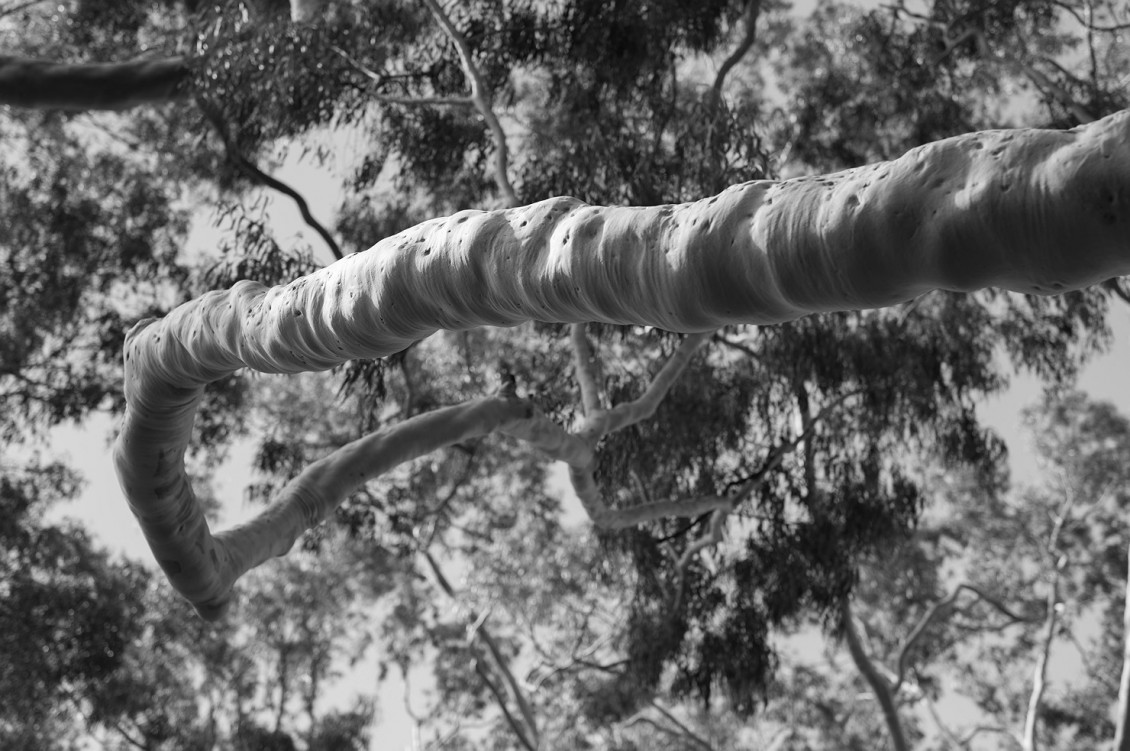 rob_dose_black_and_white_fine_art_photography-028
