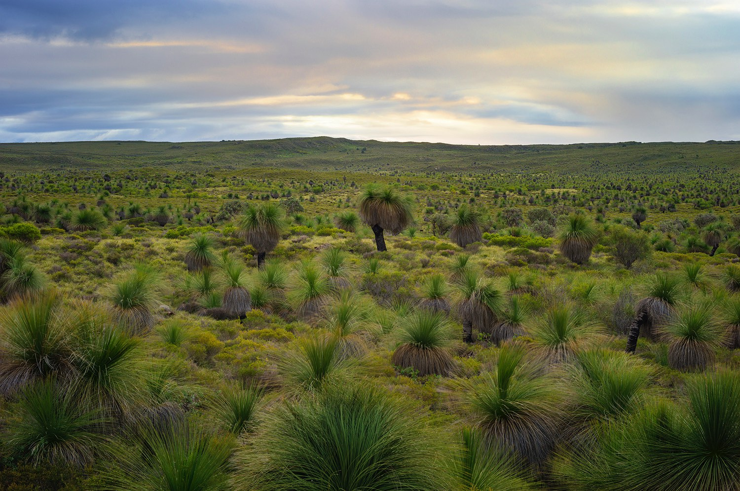 grass-tree-forest