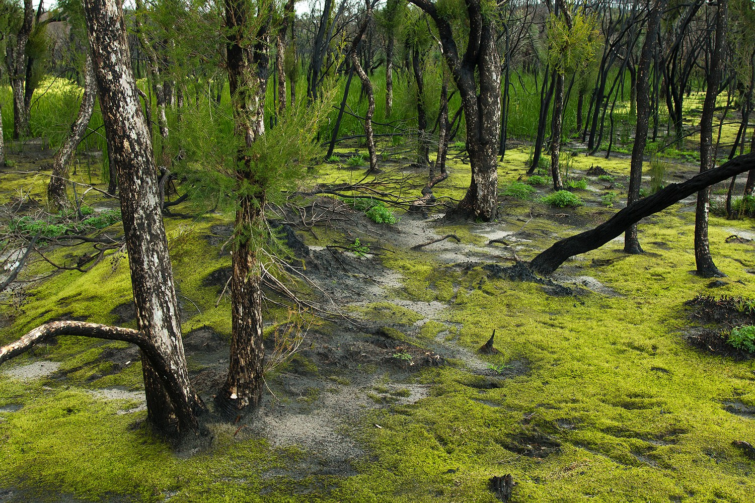 moss-forest-waroona-bushfire-rob-dose-10