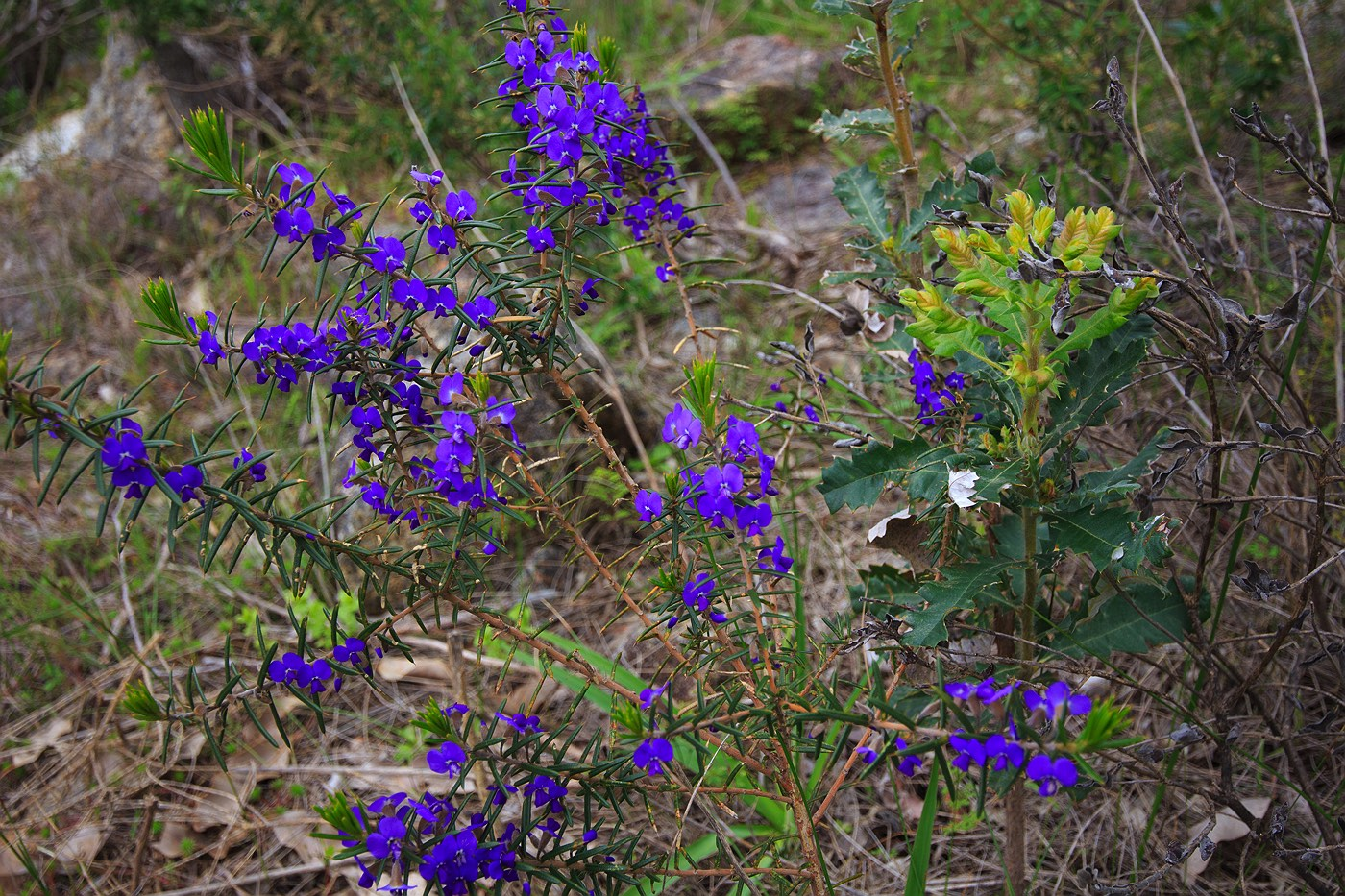 purple-wildflowers