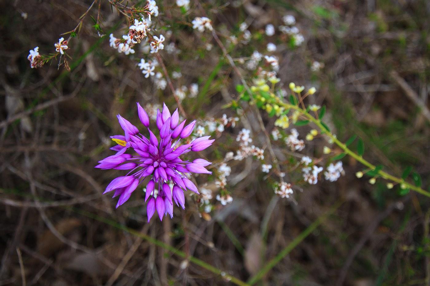 wildflowers-pink