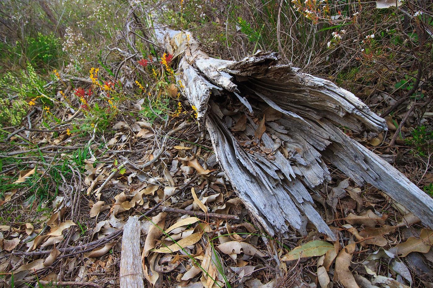wildflowers-tree-branch-floor