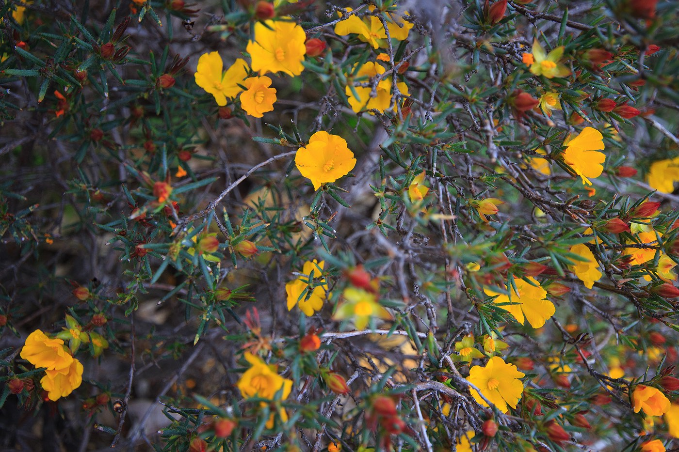 yellow-wildflowers