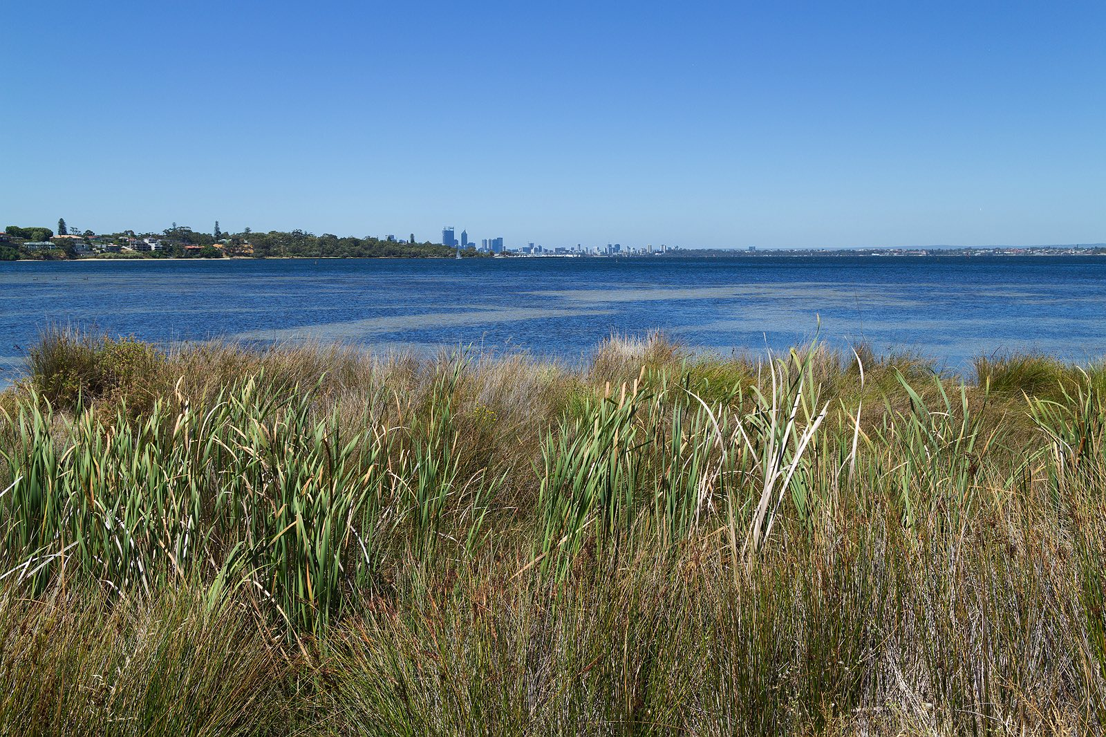 point-walter-swan-river-perth-1