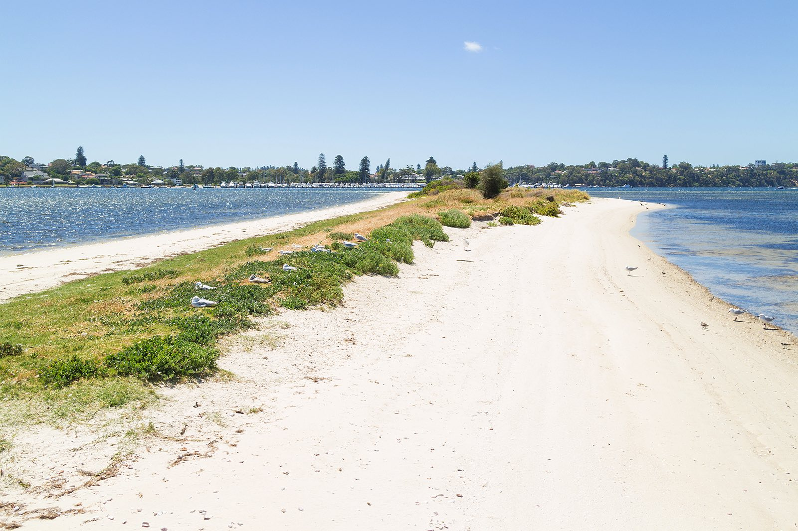 point-walter-swan-river-perth-11