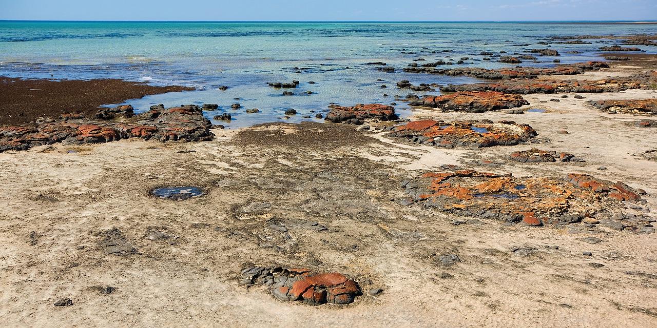 Stromatolites of Shark Bay