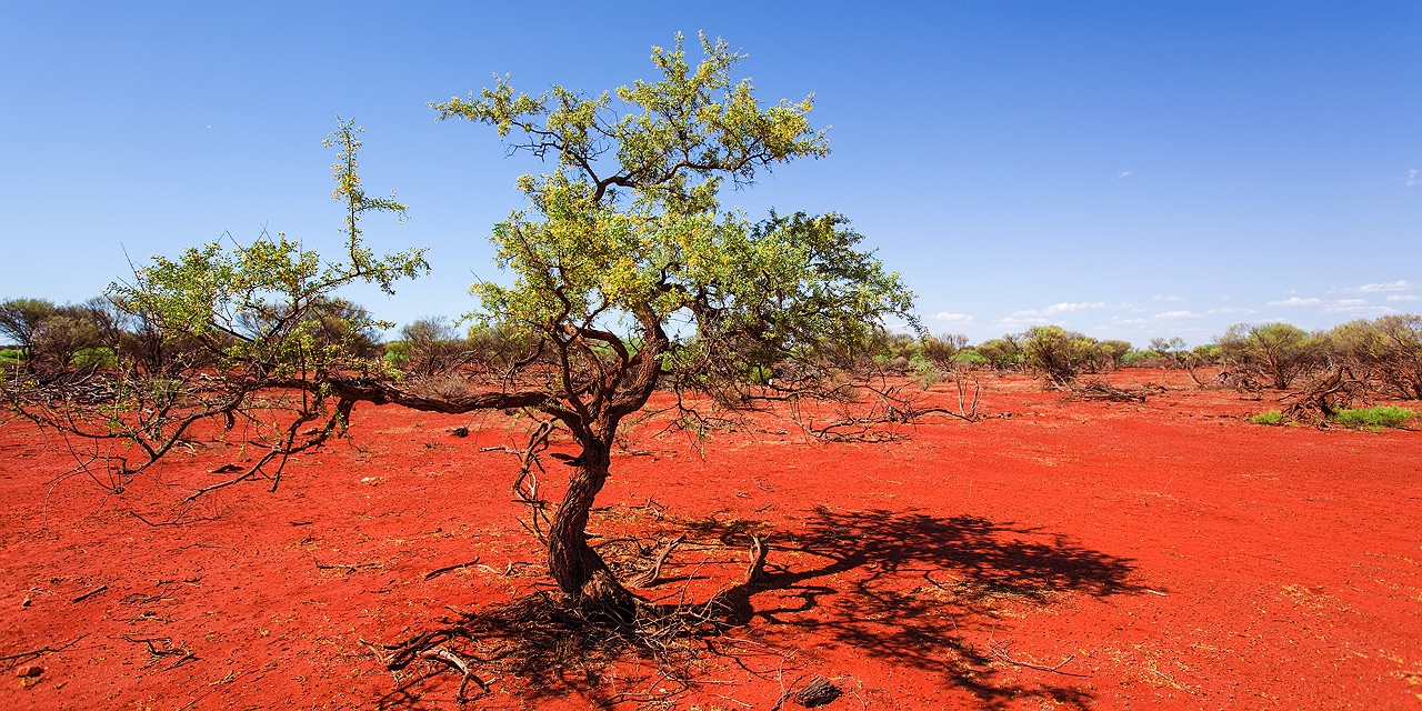 The rich red dirt of Shark Bay